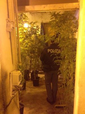 marjuana con polizia