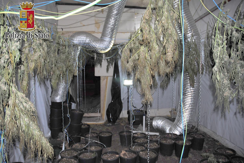 Palermo. In un casolare abbandonato una piantagione di cannabis
